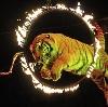 Цирки в Заволжске