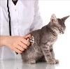 Ветеринарные клиники в Заволжске